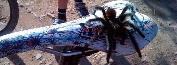 Cinco consejos para tratar las picaduras de insectos en nuestras rutas de Mountain Bike