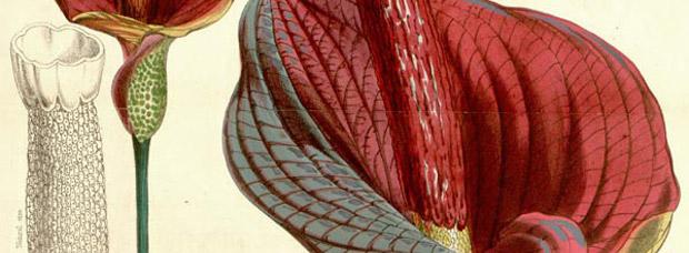 Nutrición: Glucomanano, un complemento alimenticio que realmente ayuda a perder peso