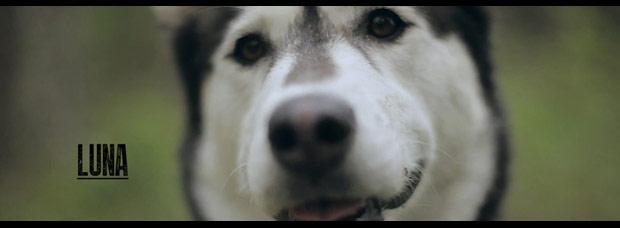 Video: 'Doggin´ It', otro divertido video sobre bicicletas rodando y mascotas corriendo
