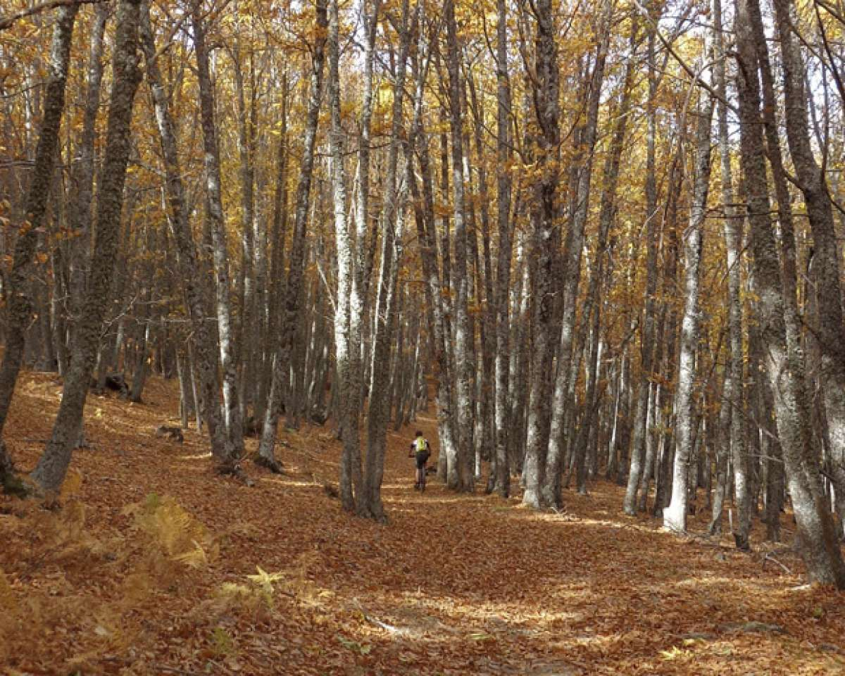 La foto del día en TodoMountainBike: 'El bosque dorado de El Tiemblo'