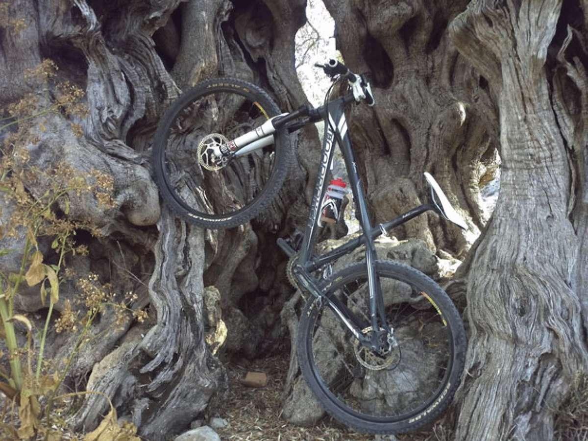 La foto del día en TodoMountainBike: 'Un alto entre olivos'