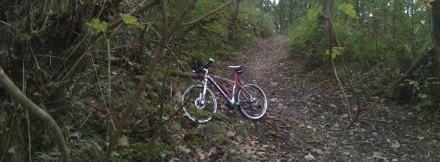 La foto del día en TodoMountainBike: 'Bosque encantado'