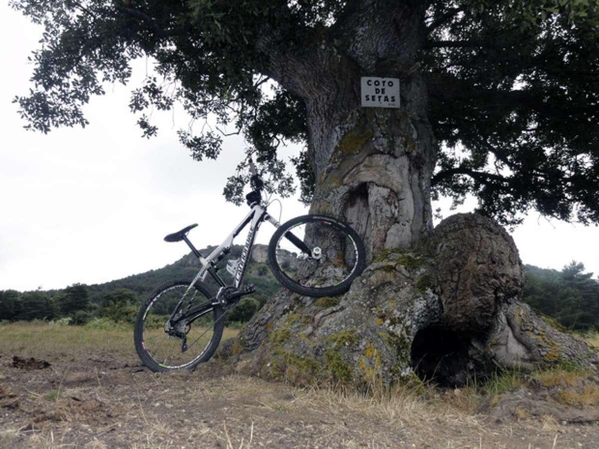 La foto del día en TodoMountainBike: 'De ruta con la Cannondale'