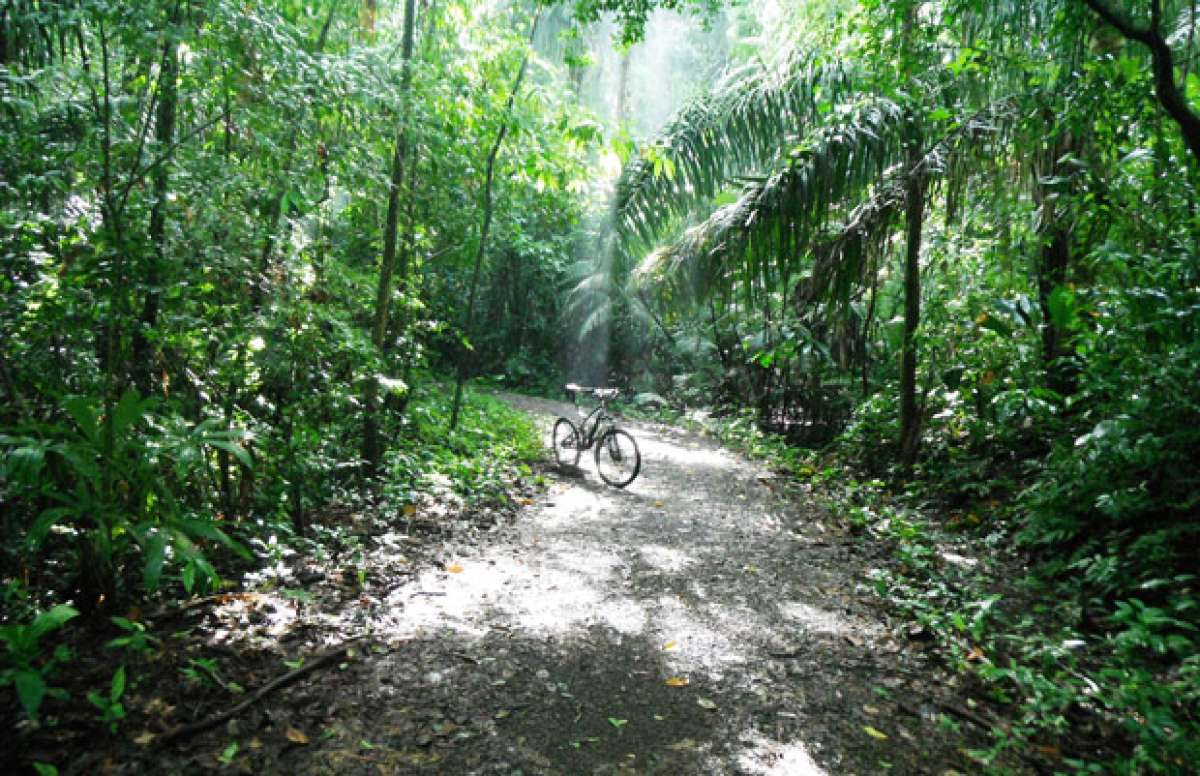 """La foto de la semana en TodoMountainBike: """"Cocoa Plantation. Camino de la Plantación Las Cascadas (Panamá)"""""""