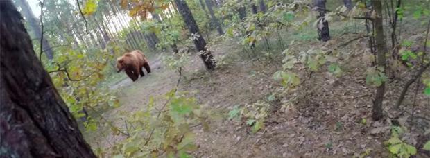 Pedalear o morir... El ataque de un gran oso pardo a un ciclista de montaña