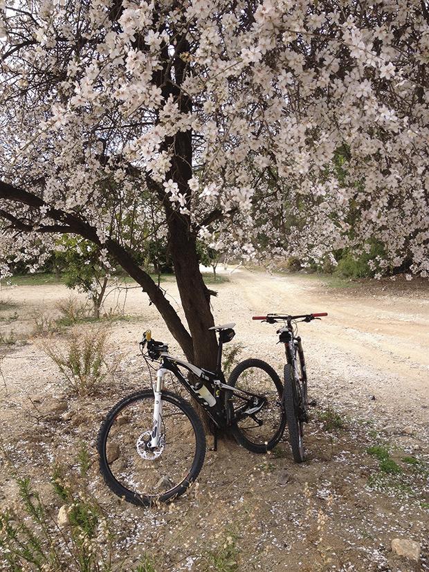 La foto del día en TodoMountainBike: 'Almendros en flor (Marbella)'