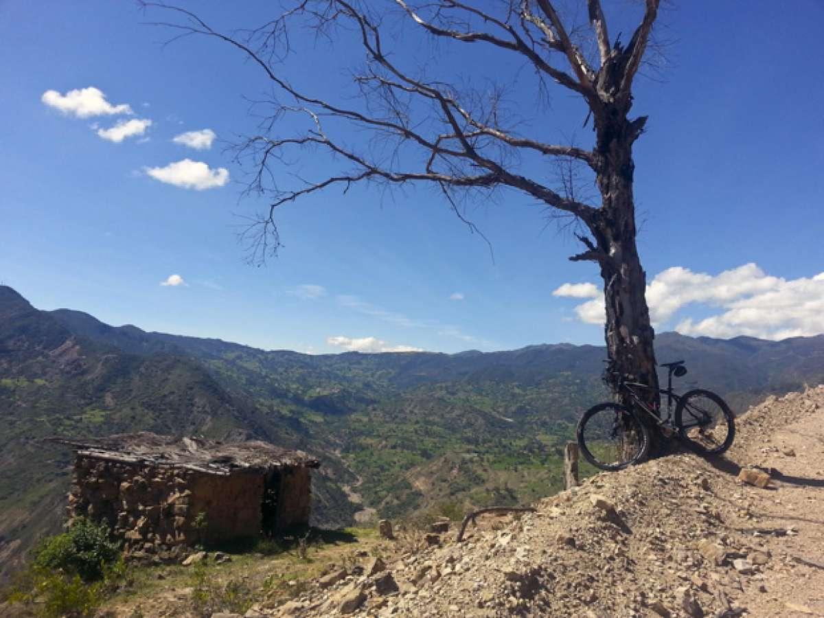 La foto del día en TodoMountainBike: 'A quien a buen árbol se arrima...'
