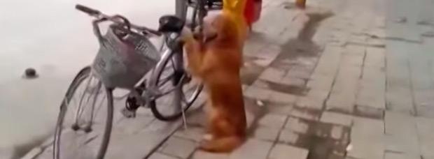 ¿El mejor antirrobo para una bicicleta? Un perro adiestrado