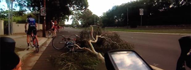 Así se parte un árbol justo encima de un grupo de ciclistas