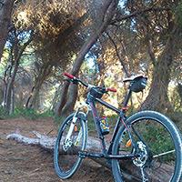 La foto del día en TodoMountainBike: 'Bosque Mediterráneo'