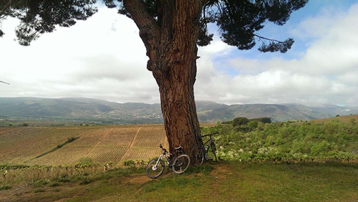 """La foto del día en TodoMountainBike: """"Viñedo en el Camino de Santiago"""""""
