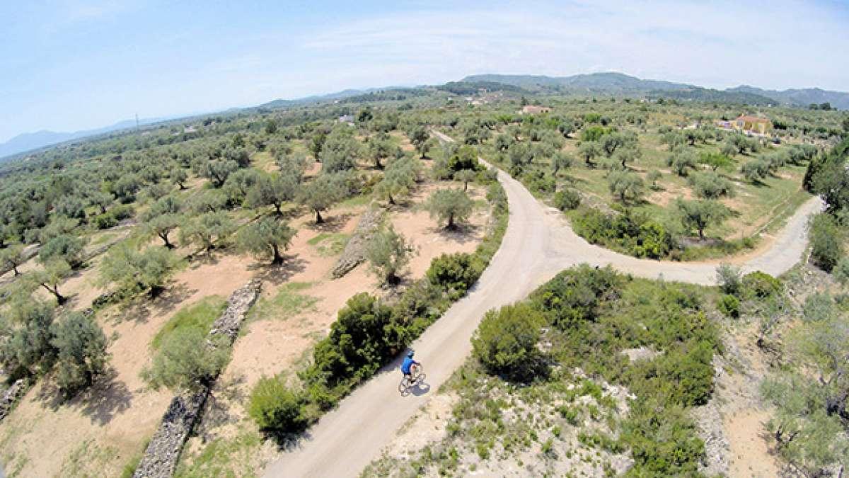 """La foto del día en TodoMountainBike: """"Campos de olivos de El Perelló desde un Dron"""""""