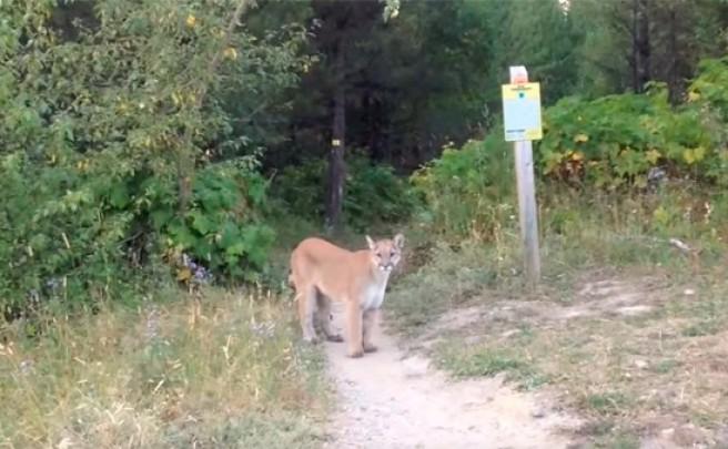 Terrorífico encuentro entre un ciclista y un puma salvaje en la Columbia Británica de Canadá