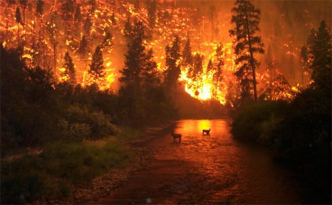 Nueva Ley de Montes para recalificar zonas quemadas 'a discreción'. ¿Arderá España?