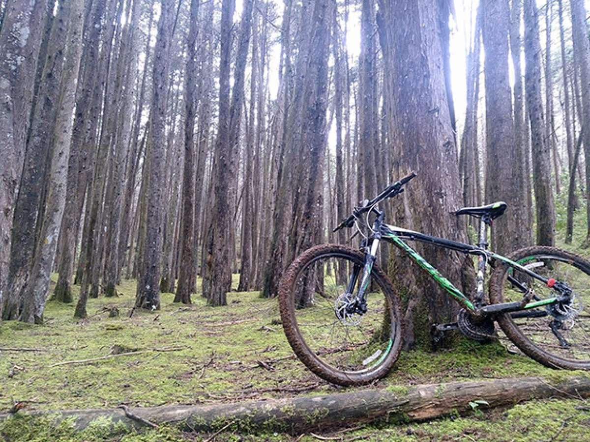La foto del día en TodoMountainBike: 'Parque Ecoturístico Arví'
