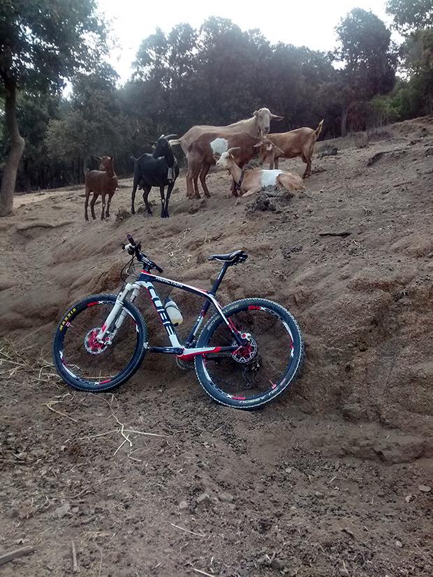 La foto del día en TodoMountainBike: 'Si suben las cabras subo yo'