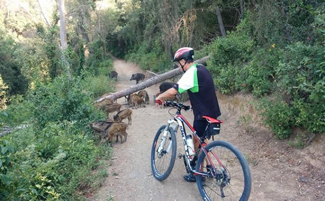 La foto del día en TodoMountainBike: 'Sorteando obstáculos'