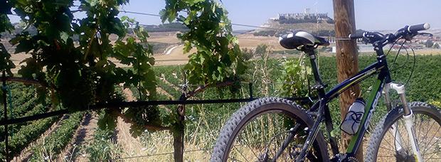 La foto del día en TodoMountainBike: 'Viñedos de Ribera del Duero'