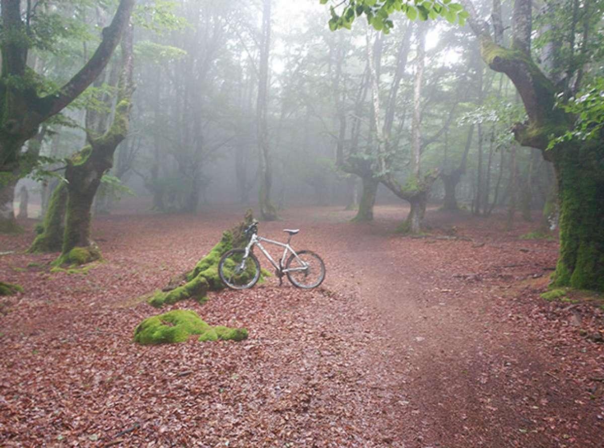 La foto del día en TodoMountainBike: 'Bosque mágico'