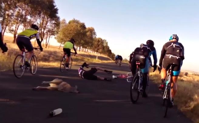 Espeluznante accidente de un ciclista embestido por un canguro