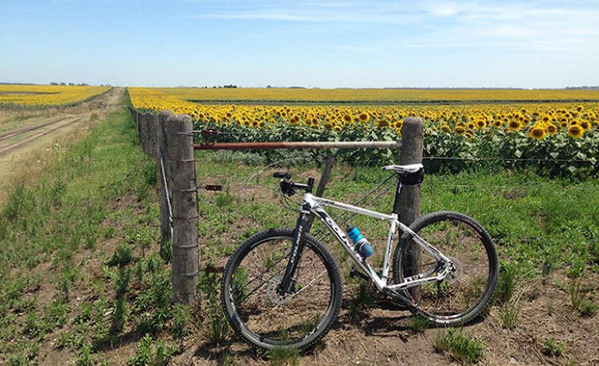 La foto del día en TodoMountainBike: 'Campos de girasoles'