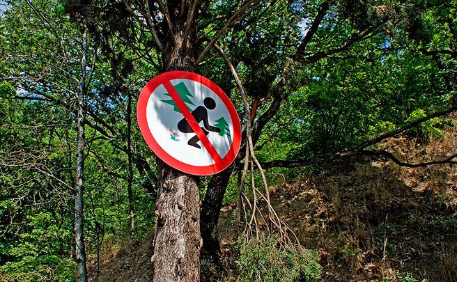 Consideraciones a tener en cuenta antes de defecar en el monte