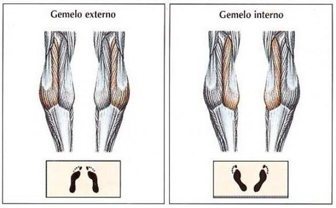 Cómo entrenar la fibras musculares de los gemelos en múltiples direcciones