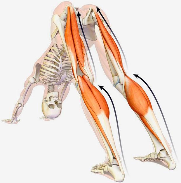 En TodoMountainBike: Cuatro ejercicios para mejorar la flexibilidad de piernas y espalda de forma instantánea en menos de 10 minutos