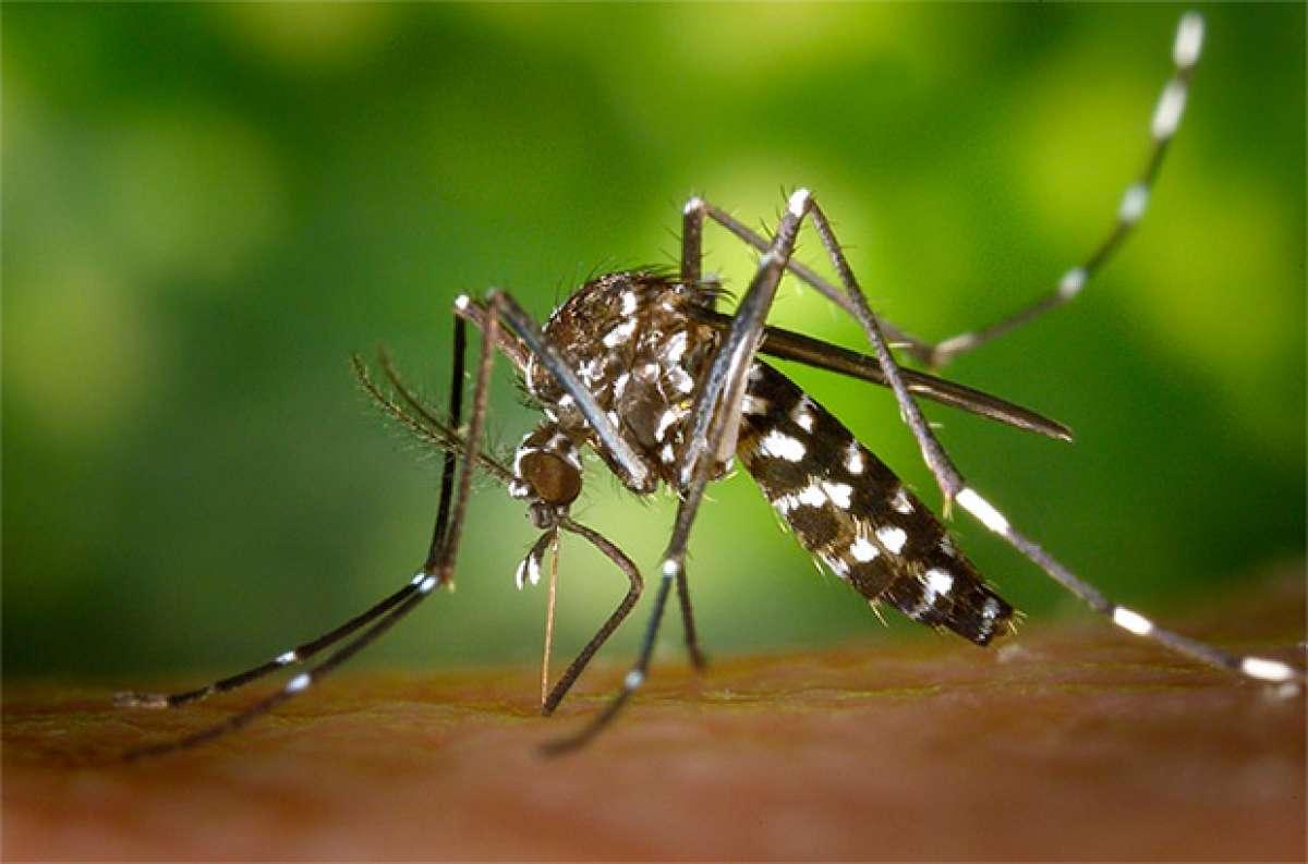 Moskito Guard, el primer repelente de mosquitos que cuida la piel del deportista