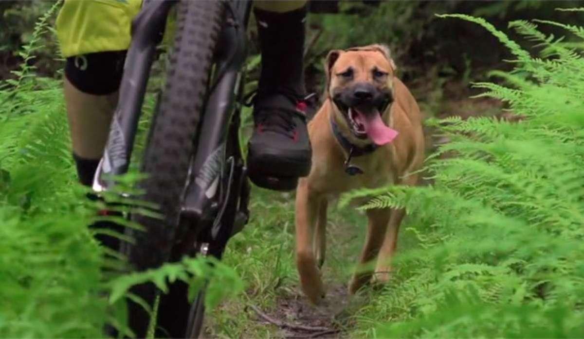 Adam Morse y su perro Flow, en las Green Mountains de Vermont
