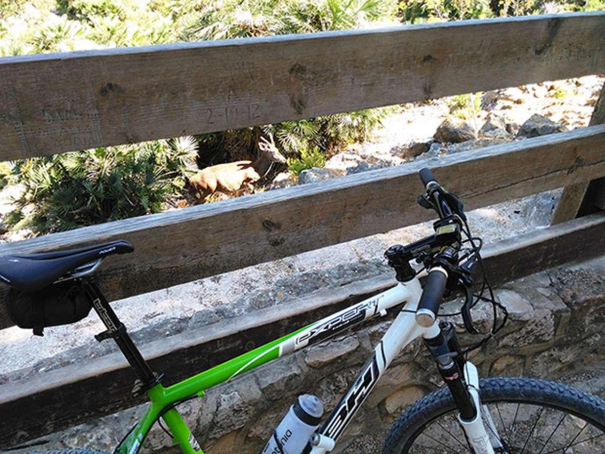 """La foto del día en TodoMountainBike: """"Reserva de Ciervos Valle de La Casella (Alzira)"""""""