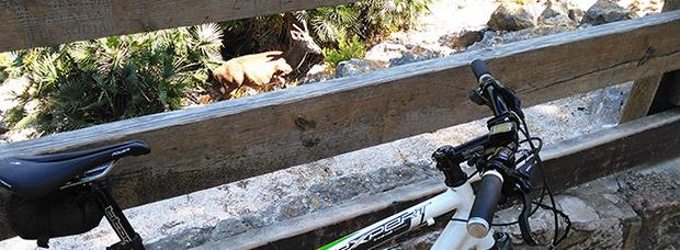 La foto del día en TodoMountainBike: 'Reserva de Ciervos Valle de La Casella (Alzira)'