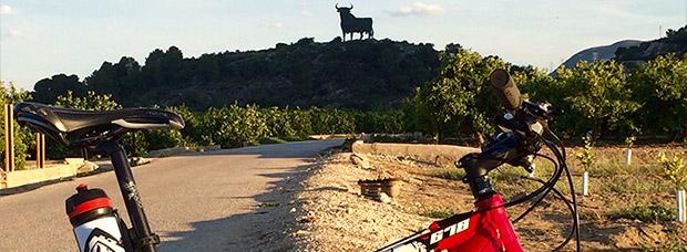 La foto del día en TodoMountainBike: 'Toro de Tavernes de la Valldigna'
