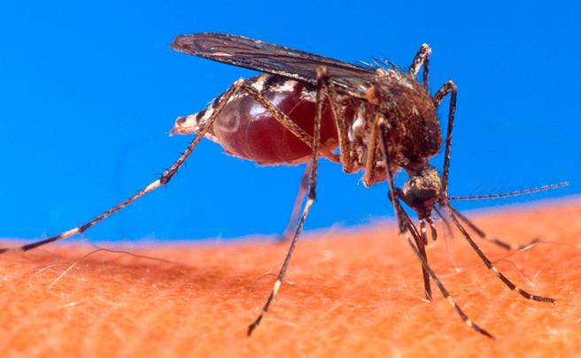 Delincuencia y virus del Zika, o por qué los JJ.OO. de Río van a ser los más peligrosos de la Historia