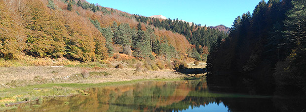 La foto del día en TodoMountainBike: 'Bosque de Irati'
