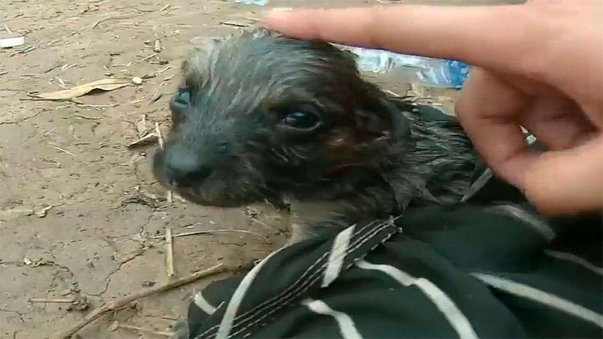 En TodoMountainBike: Ciclista encuentra un cachorro recién nacido medio muerto y logra resucitarlo