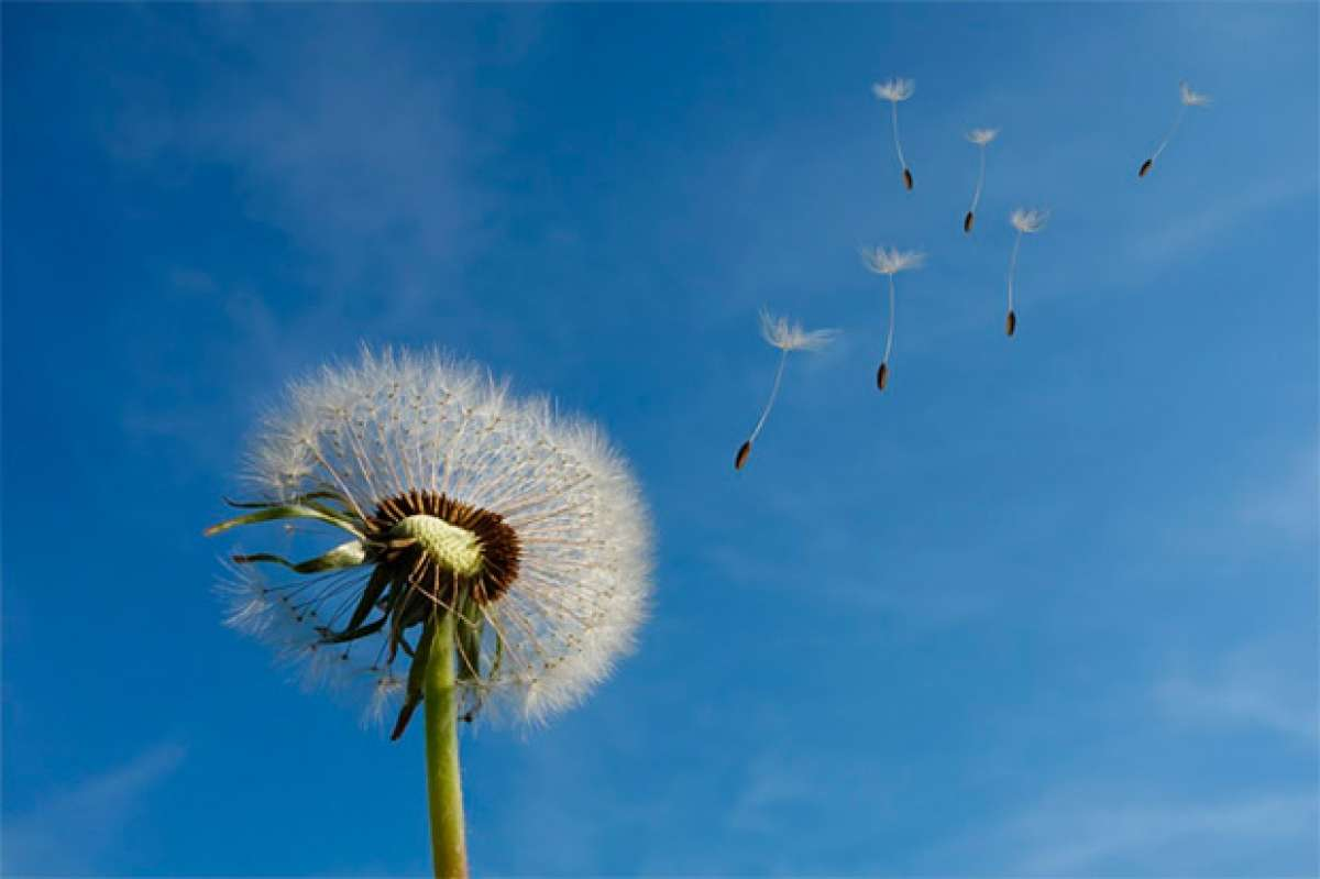 En TodoMountainBike: Para ciclistas alérgicos: consejos para seguir rodando en los meses más alergénicos del año