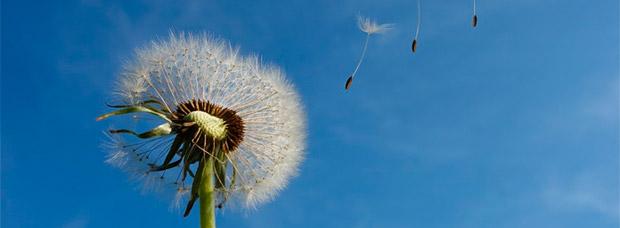 Para ciclistas alérgicos: consejos para seguir rodando en los meses más alergénicos del año