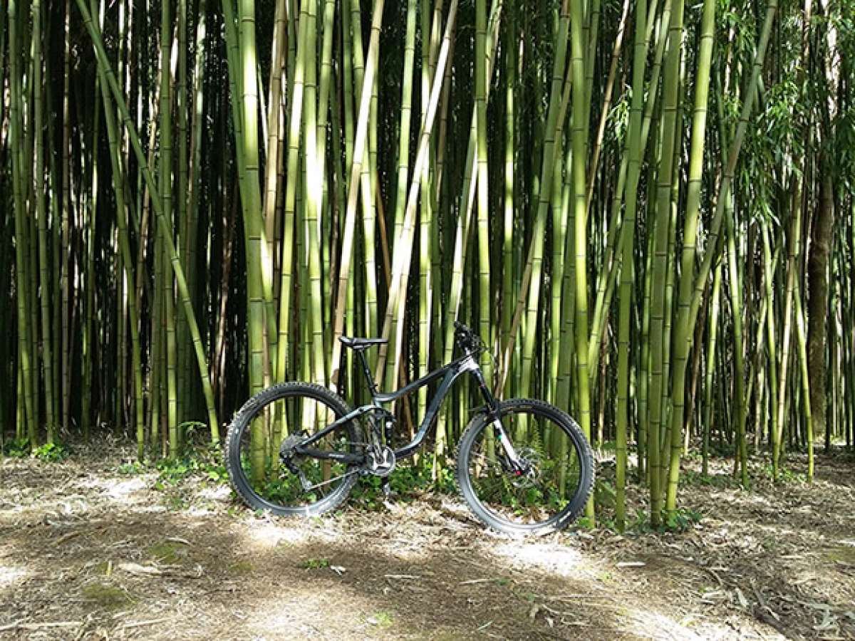 En TodoMountainBike: La foto del día en TodoMountainBike: 'Entre bambús'