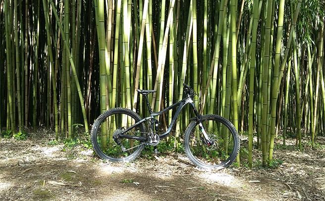 La foto del día en TodoMountainBike: 'Entre bambús'