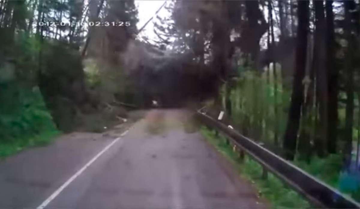 Los peligros de rodar en un bosque cuando la climatología es adversa