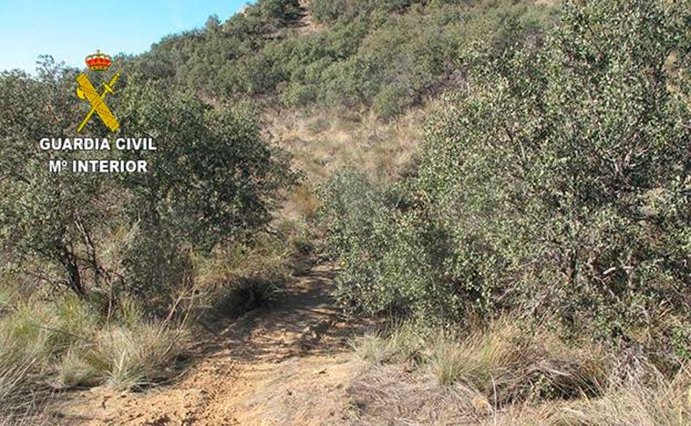 En TodoMountainBike: Alerta en Segovia: trampa mortal para ciclistas en una pista forestal de Bernardos