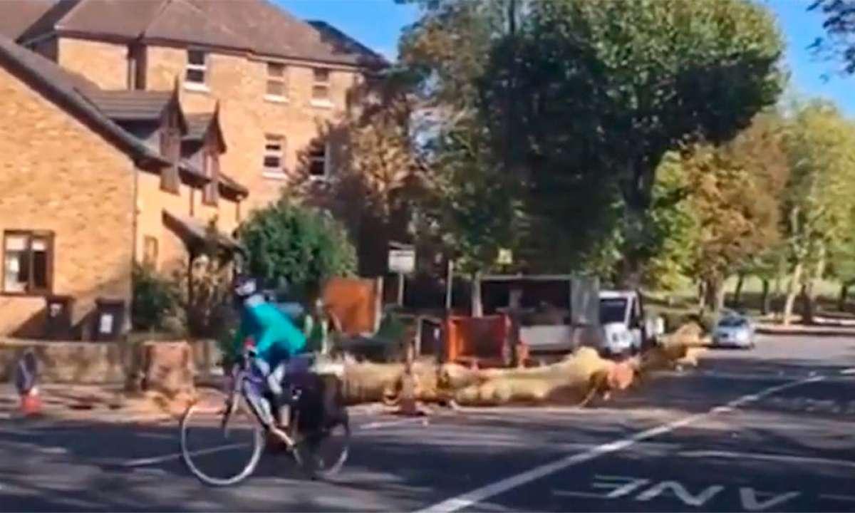Ciclista salvándose por los pelos de morir aplastado por un árbol