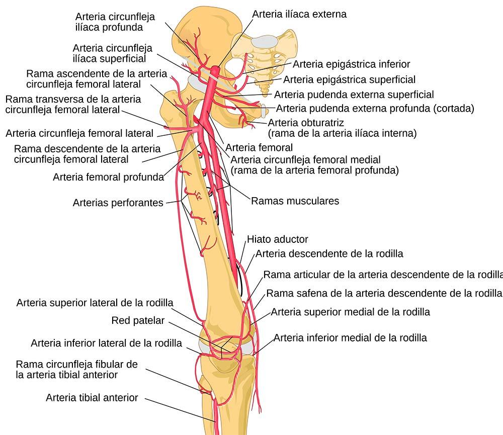 En TodoMountainBike: Pauline Ferrand-Prévot confirma que tiene endofibrosis de la arteria ilíaca en ambas piernas