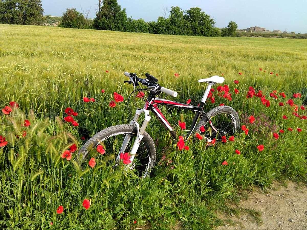 """La foto del día en TodoMountainBike: """"Entre campos de cereales"""""""