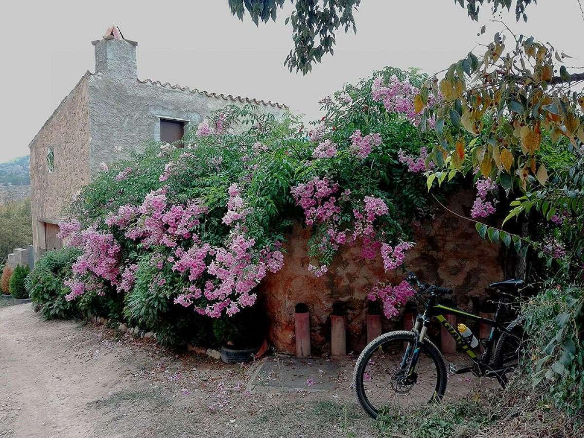 En TodoMountainBike: La foto del día en TodoMountainBike: 'Otoño florido'